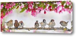 птицы в мае