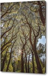 Исполинские деревья с яркими и красивыми кронами