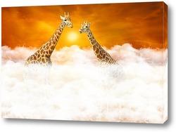 Рандеву двух жирафов выше облаков