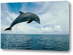 Картина Dolphin090