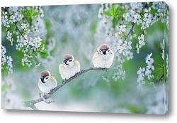 птицы в майском саду