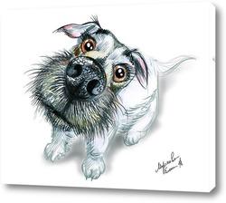 Любовь собаки2