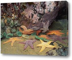 starfish050