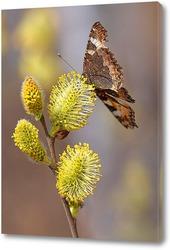 Бабочка на ветке вербы