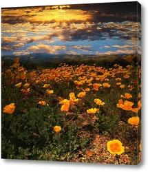 Цветы закатные