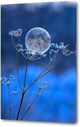 Мыльный пузырь на бутоне увядшего растения