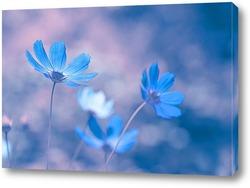 Голубые цветы на нежном фоне