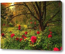 Цветут пионы