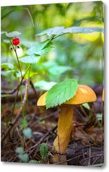 Картина Гриб в лесу
