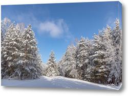 Картина Утро в зимнем сосновом лесу