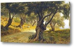 Оливковая роща.Палермо