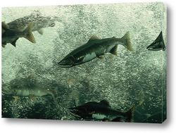 fish049