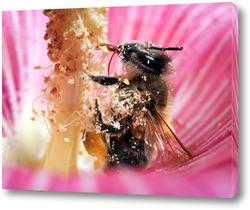Картина Пчела