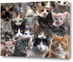 Картина Очень много кошек