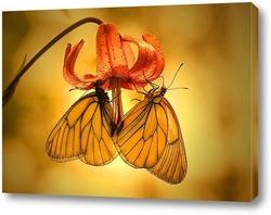 Бабочки на цветке лилии