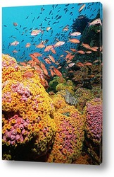 Картина Coral058