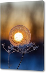 Мыльные пузыри на фоне восходящего солнца