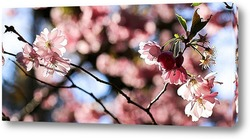 Картина Праздник цветения сакуры