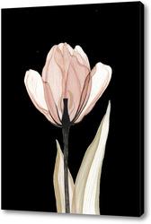 Картина Прозрачный тюльпан