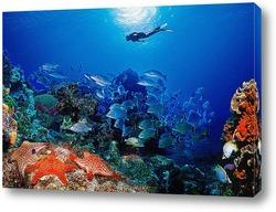 Картина Coral004