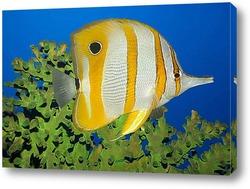 fish046