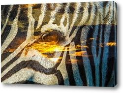 Зебра и закат солнца