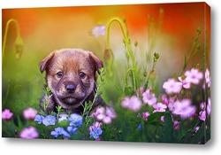 Картина щенок на лугу