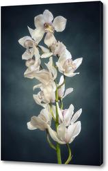 Картина Ветка орхидеи цимбидиум