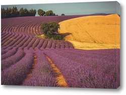 Картина поля лаванды