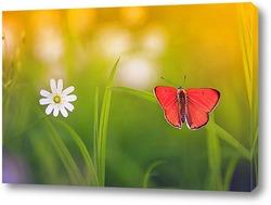 яркая оранжевая бабочка сидит на летнем лугу
