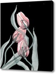 Картина Прозрачные тюльпаны