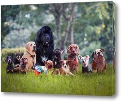 Такие разные собаки