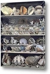 Картина Коллекция раковин