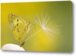 Картина Бабочка на семени одуванчика