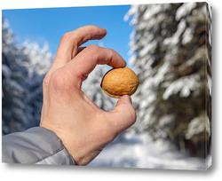 Картина Грецкий орех в руке человека