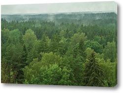Река в лесу панорамы
