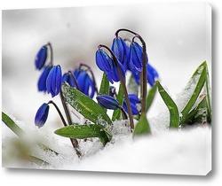 В мире наступающей весны...