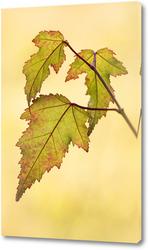 Картина Красивые осенние листья
