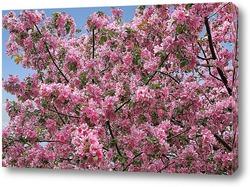 Яблоня в цвету - какое чудо!