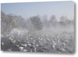 Картина Лебеди на озере на Алтае