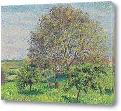 Большой Орешник Весной,1894
