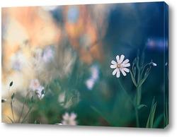 нежный белый цветок на весеннем лугу