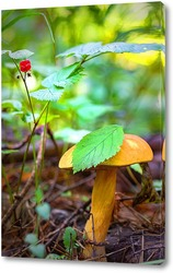 Лесной гриб с ягодами костяники