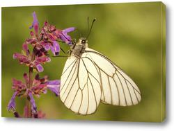 Картина Бабочка на красиво цветке