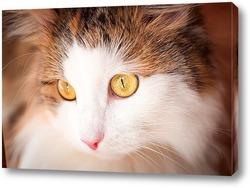 Картина красивая кошка