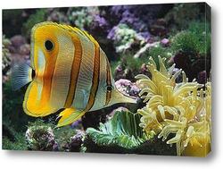 fish131