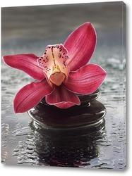 Картина Розовая орхидея на мокром стекле