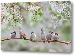 птенцы в мае