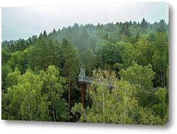 Дорожки над лесом