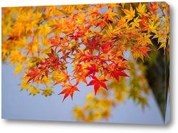 Осень красна